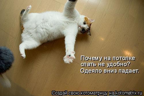 Котоматрица: Почему на потолке  спать не удобно? Одеяло вниз падает.