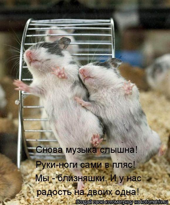 Котоматрица: Снова музыка слышна! Руки-ноги сами в пляс! Мы - близняшки. И у нас радость на двоих одна!