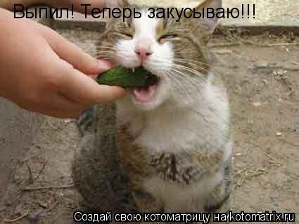 Котоматрица: Выпил! Теперь закусываю!!!