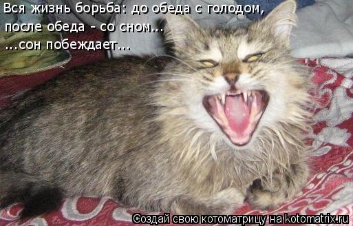 Котоматрица: Вся жизнь борьба: до обеда с голодом,  после обеда - со сном...  ...сон побеждает...