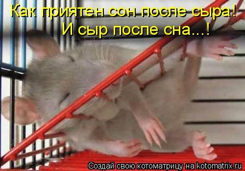 Котоматрица: Как приятен сон после сыра! И сыр после сна...!