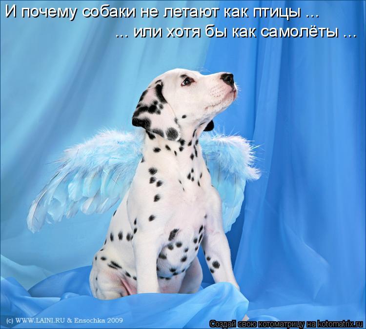 Котоматрица: И почему собаки не летают как птицы ... ... или хотя бы как самолёты ...