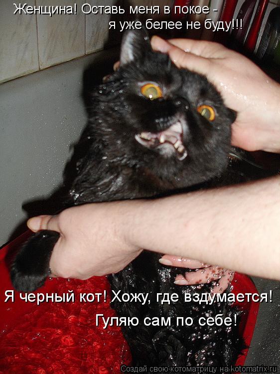 Котоматрица: Женщина! Оставь меня в покое -  я уже белее не буду!!! Я черный кот! Хожу, где вздумается!  Гуляю сам по себе!