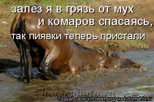 Котоматрица: залез я в грязь от мух   и комаров спасаясь, так пиявки теперь пристали