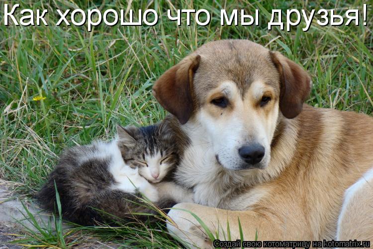 Котоматрица: Как хорошо что мы друзья!