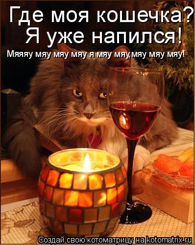 Котоматрица: Где моя кошечка??? Я уже напился! Мяяяу мяу мяу мяу я мяу мяу,мяу мяу мяу!