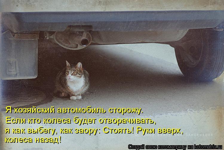 Котоматрица: Я хозяйский автомобиль сторожу. Если кто колеса будет отворачивать, я как выбегу, как заору: Стоять! Руки вверх,  колеса назад!