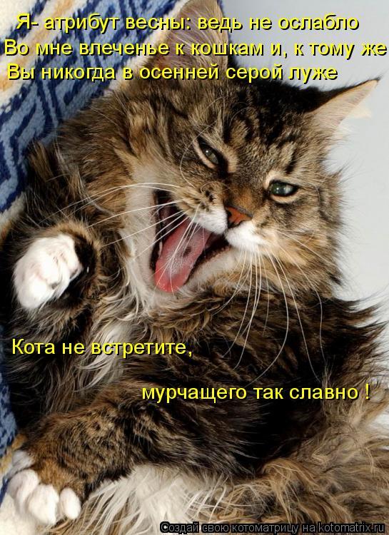 Котоматрица: Я- атрибут весны: ведь не ослабло  Во мне влеченье к кошкам и, к тому же Вы никогда в осенней серой луже  Кота не встретите, мурчащего так слав