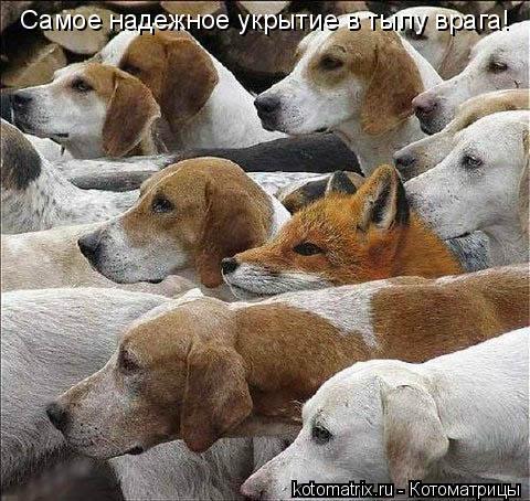 Котоматрица: Самое надежное укрытие в тылу врага!