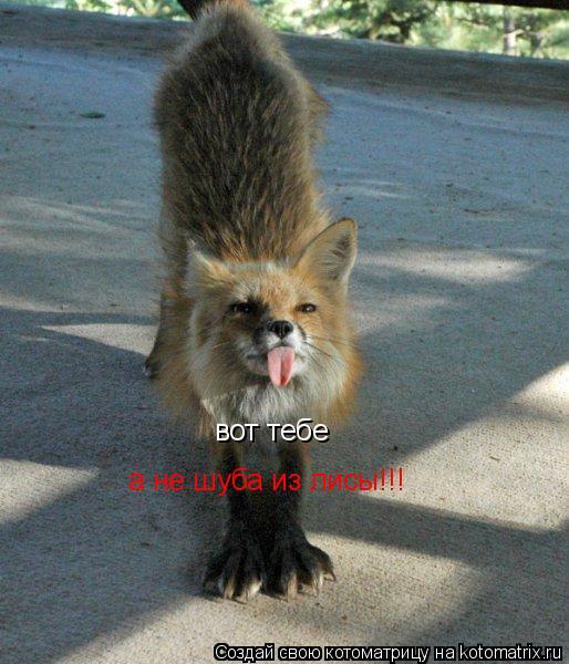 Котоматрица: вот тебе а не шуба из лисы!!!