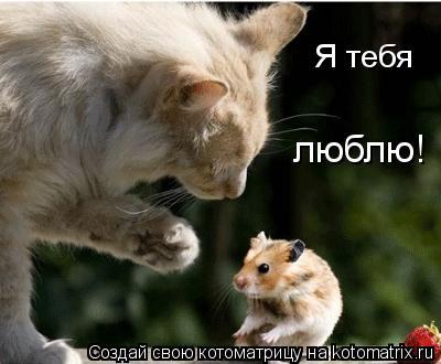 Котоматрица: Я тебя люблю!