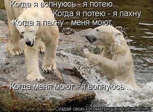 Котоматрица: Когда я волнуюсь - я потею.  Когда я потею - я пахну.  Когда я пахну - меня моют.  Когда меня моют - я волнуюсь...