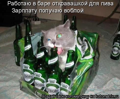 Котоматрица: Работаю в баре откравашкой для пива Зарплату получаю воблой Зарплату получаю воблой
