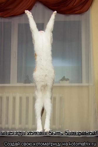 Котоматрица: я всегда хотела быть балериной! я всегда хотела быть балериной!