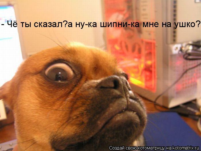 Котоматрица: - Чё ты сказал?а ну-ка шипни-ка мне на ушко?