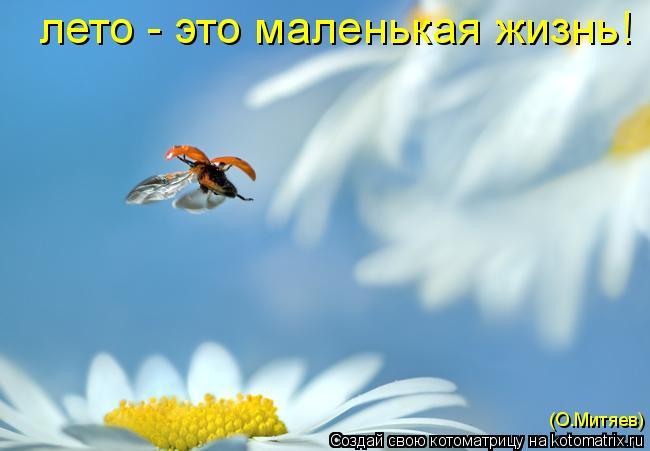 Котоматрица: лето - это маленькая жизнь! (О.Митяев)