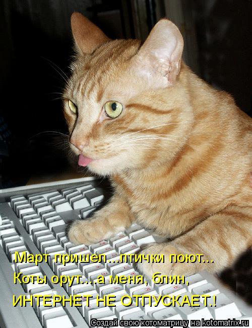 Котоматрица: Март пришел...птички поют... Коты орут....а меня, блин,  ИНТЕРНЕТ НЕ ОТПУСКАЕТ…!