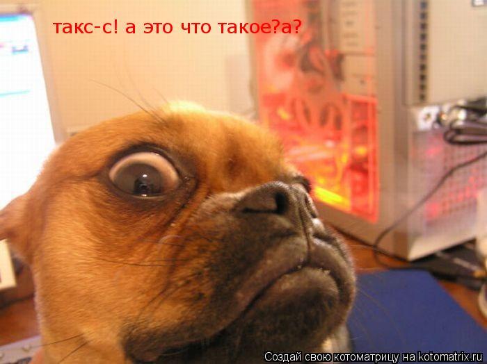 Котоматрица: такс-с! а это что такое?а?