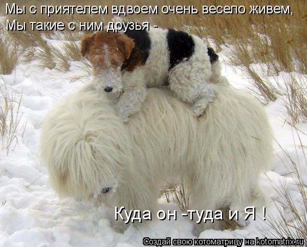 Котоматрица: Мы с приятелем вдвоем очень весело живем,  Мы такие с ним друзья - Куда он -туда и Я !