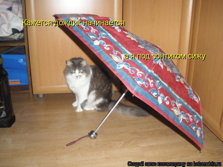 Котоматрица: Кажется дождик начинается а я под зонтиком сижу