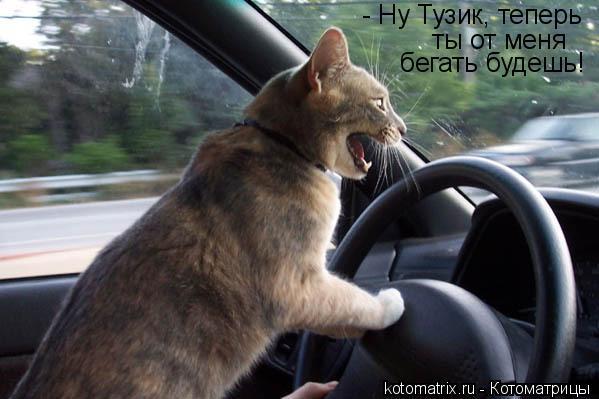 Котоматрица: - Ну Тузик, теперь  ты от меня  бегать будешь!