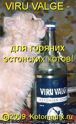 Котоматрица: VIRU VALGE - для горячих  эстонских котов! с 2009  Kotomatrix.ru O