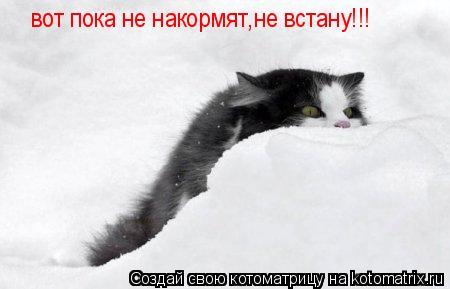 Котоматрица: вот пока не накормят,не встану!!! вот пока не накормят,не встану!!!