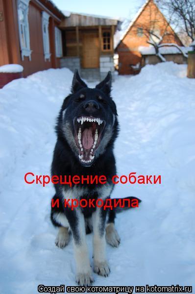 Котоматрица: Скрещение собаки и крокодила