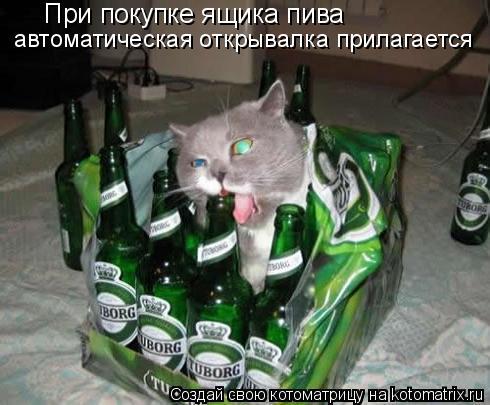 Котоматрица: При покупке ящика пива автоматическая открывалка прилагается