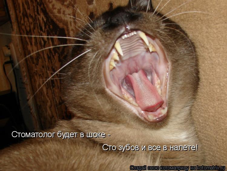 Котоматрица: Стоматолог будет в шоке -  Сто зубов и все в налёте!
