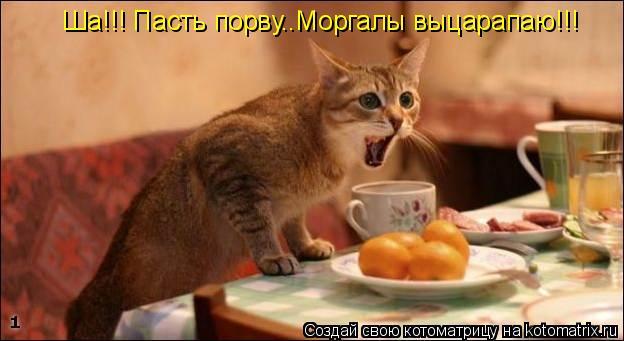 Котоматрица: Ша!!! Пасть порву..Моргалы выцарапаю!!!