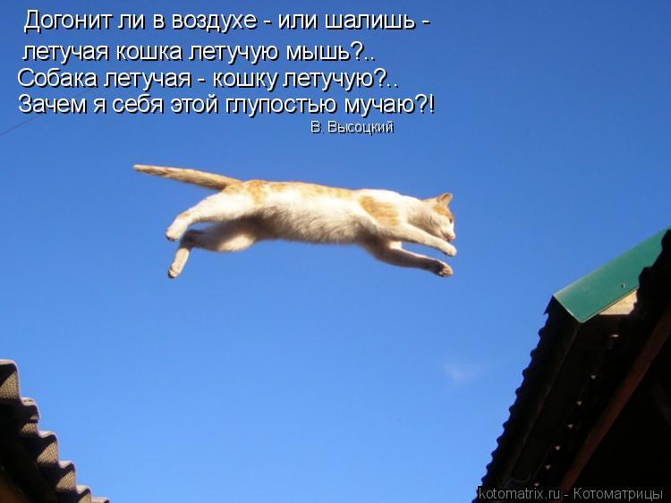 Котоматрица: Догонит ли в воздухе - или шалишь - летучая кошка летучую мышь?.. Собака летучая - кошку летучую?.. Зачем я себя этой глупостью мучаю?! В. Высоцк