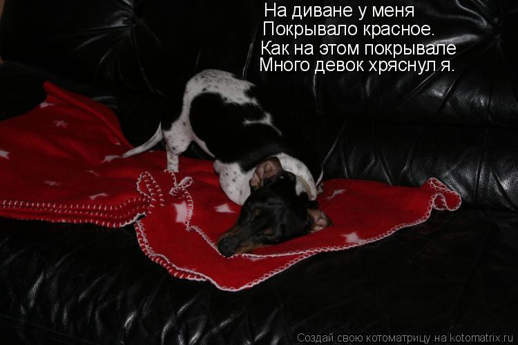 Котоматрица: На диване у меня  Покрывало красное.  Как на этом покрывале  Много девок хряснул я.