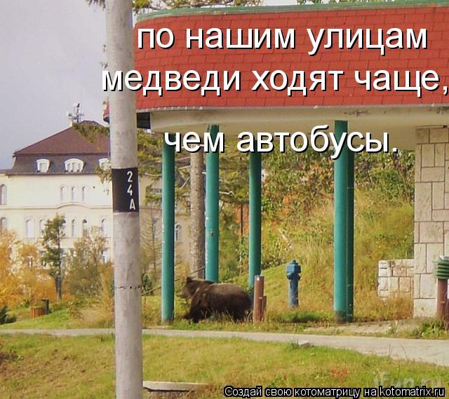 Котоматрица: по нашим улицам   медведи ходят чаще,  чем автобусы.