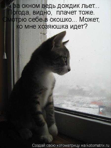 Котоматрица: А за окном ведь дождик льет... Погода, видно,  плачет тоже. ко мне хозяюшка идет? Смотрю себе в окошко... Может,