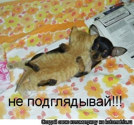 Котоматрица: не подглядывай!!!