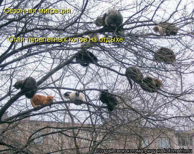 Котоматрица: Сезонная миграция. Стая перелетных котов на отдыхе.