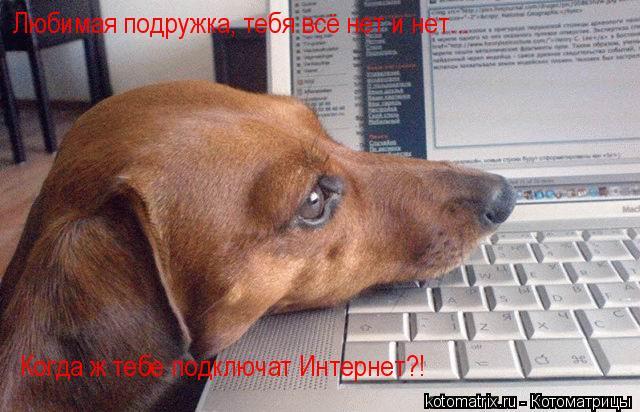 Котоматрица: Любимая подружка, тебя всё нет и нет...  Когда ж тебе подключат Интернет?!
