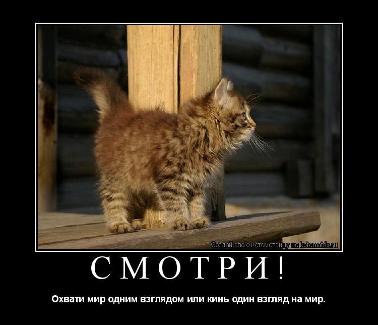 Котоматрица: СМОТРИ! Охвати мир одним взглядом или кинь один взгляд на мир.