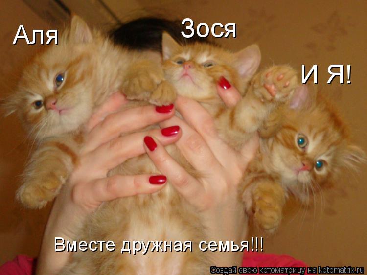Котоматрица: Аля Зося И Я! Вместе дружная семья!!!