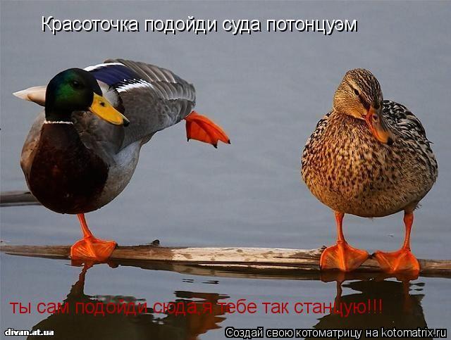 Котоматрица: Красоточка подойди суда потонцуэм ты сам подойди сюда,я тебе так станцую!!!