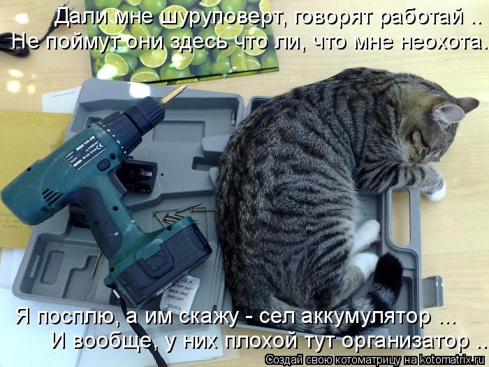 Котоматрица: Дали мне шуруповерт, говорят работай ..  Не поймут они здесь что ли, что мне неохота.. Я посплю, а им скажу - сел аккумулятор ...  И вообще, у них п