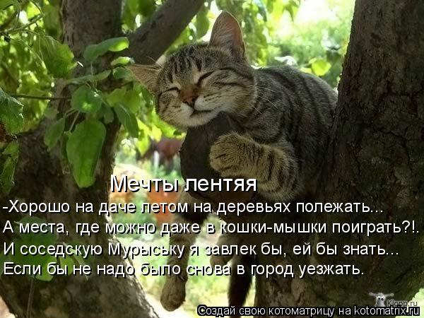 Котоматрица: -Хорошо на даче летом на деревьях полежать... А места, где можно даже в кошки-мышки поиграть?!. Если бы не надо было снова в город уезжать. И сос