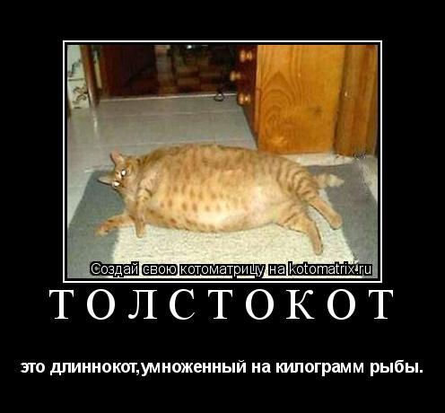 Котоматрица: ТОЛСТОКОТ это длиннокот,умноженный на килограмм рыбы.