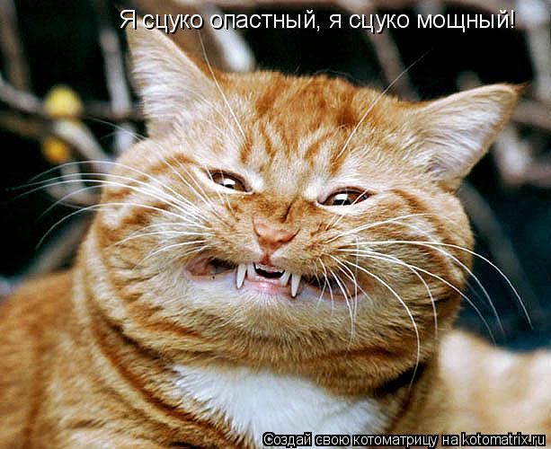 Котоматрица: Я сцуко опастный, я сцуко мощный!
