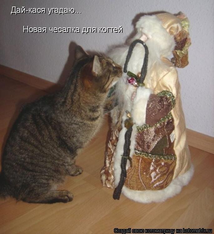Котоматрица: Дай-кася угадаю... Новая чесалка для когтей