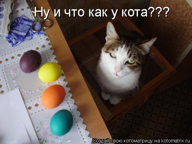 Котоматрица: Ну и что как у кота???
