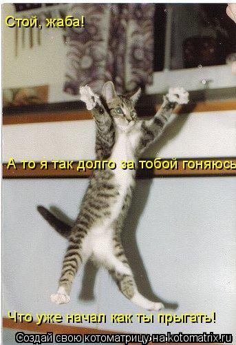 Котоматрица: А то я так долго за тобой гоняюсь,  Стой, жаба!  Что уже начал как ты прыгать!