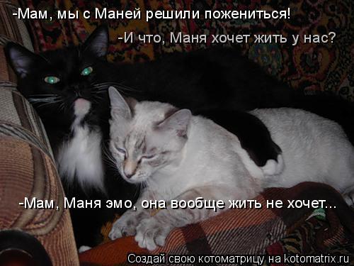 Котоматрица: -Мам, мы с Маней решили пожениться! -И что, Маня хочет жить у нас? -Мам, Маня эмо, она вообще жить не хочет...
