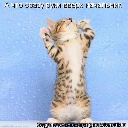 Котоматрица: А что сразу руки вверх начальник